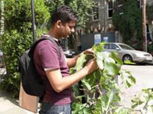 Northampton student Muzafar Hussain conducting pollinator research