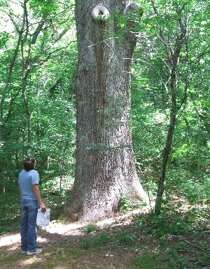 treeassess_72