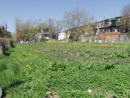 Old community garden plot in an inner block ©BES LTER